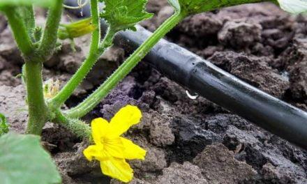 Custos de irrigação no Brasil podem diminuir com soluções de IOT