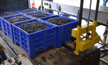 Cooperativa Vinícola Garibaldi projeta 15% de crescimento na Safra 2019
