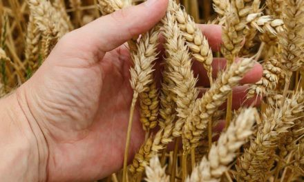 Tokio Marine expande atuação no agronegócio com novo Seguro Agro Safra