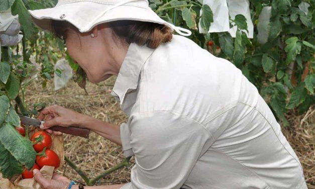 Syngenta e Embrapa celebram a evolução de pequenos e médios produtores que integram o projeto Tomatec