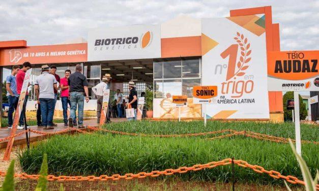 Trigo de 120 dias permite antecipação da semeadura da soja no Rio Grande do Sul