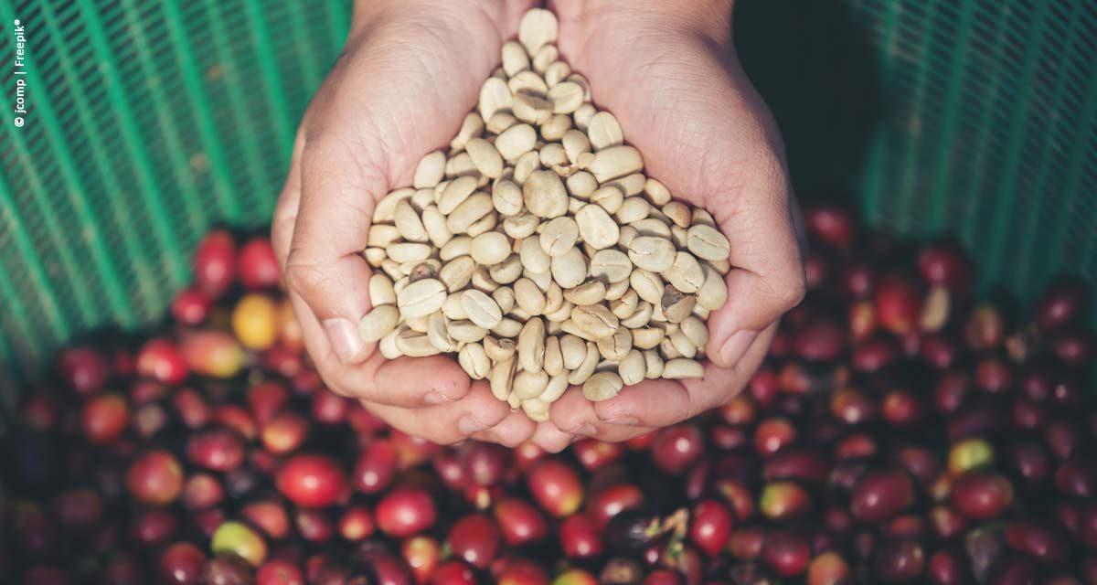 Em fevereiro, exportação de café bate novo recorde mensal em relação aos anos anteriores