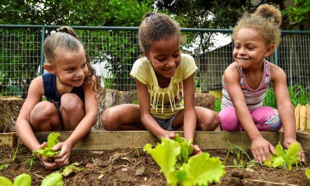 Horta coletiva será ambiente de aprendizagem em escola de Contagem