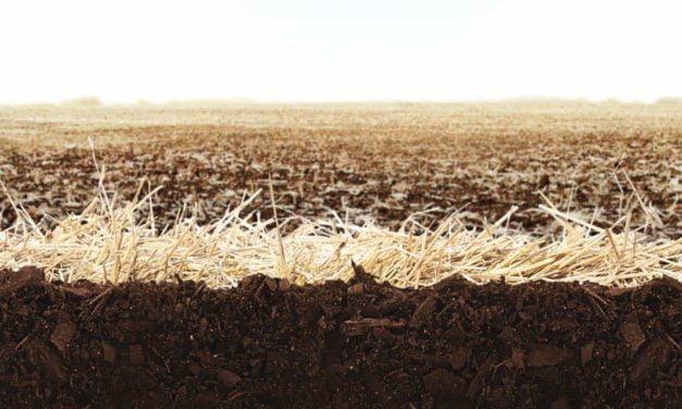 Boas Práticas Agrícolas: Aumento da eficiência produtiva com melhor custo-benefício