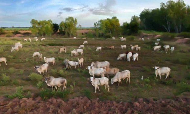 Pesquisadores vão usar drones para detecção e contagem de gado