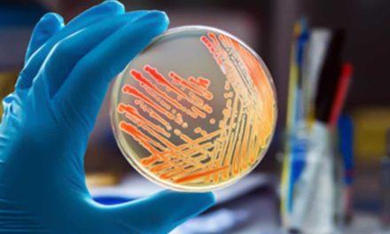 Salmonela e o controle integrado na cadeia produtiva de proteína animal