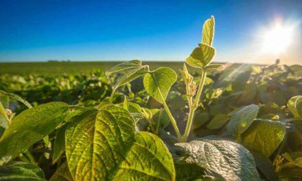 Yara lança solução nutricional específica para o solo brasileiro