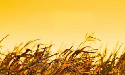 FS Bioenergia anuncia construção de mais três usinas de etanol de milho no Brasil