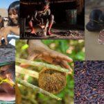 Origens Brasil® surge para conservar as florestas e valorizar os produtos da sociobiodiversidade de povos indígenas e populações tradicionais