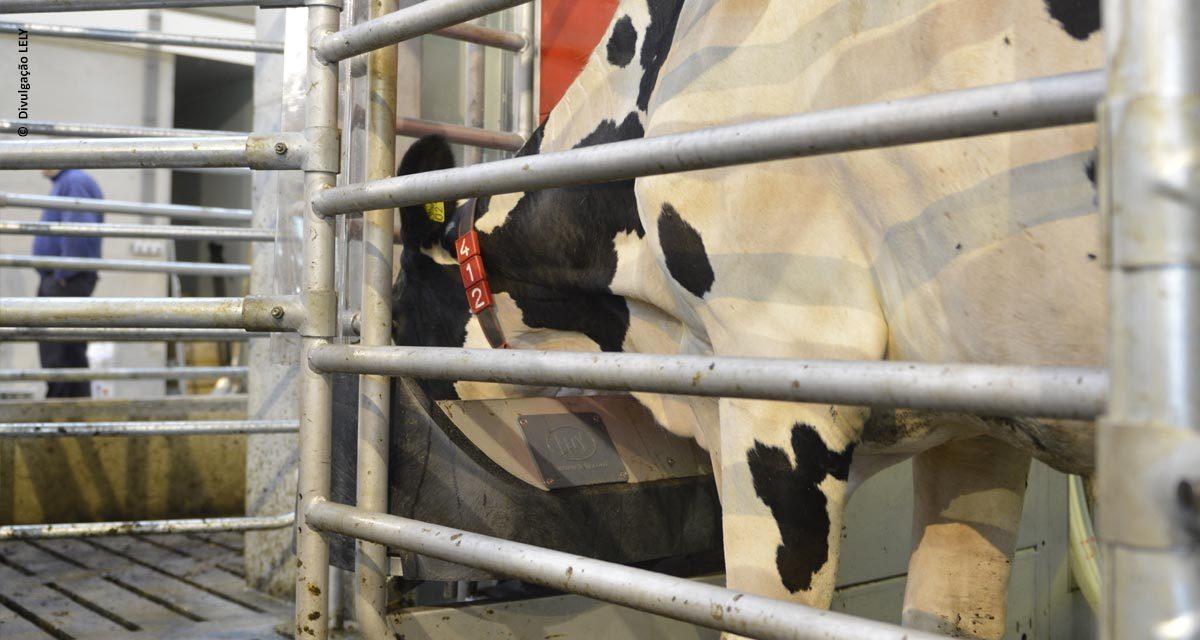 Alimentador para ordenha robotizada gera economia para o produtor de leite