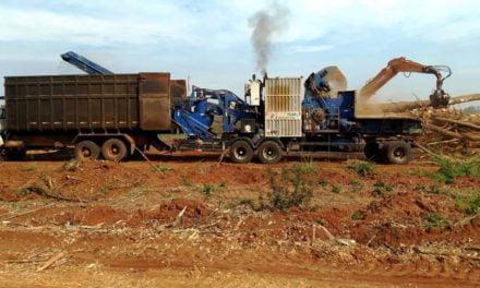 Pesquisa da Secretaria de Agricultura e Abastecimento estuda uso de madeira de seringais na produção de biomassa