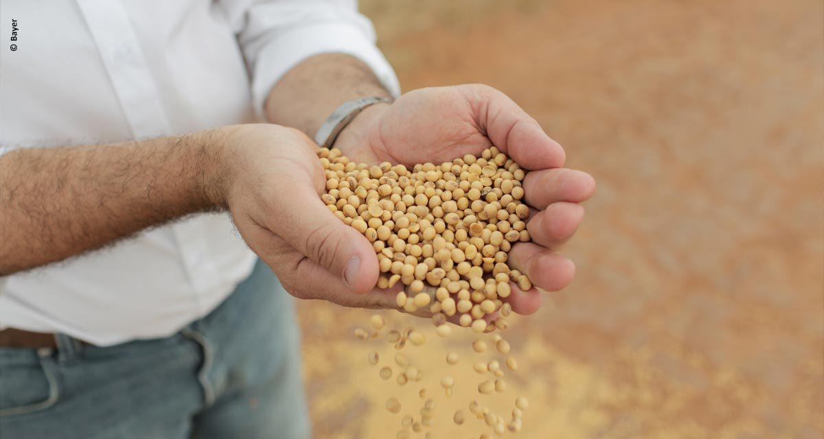 Maior produtor paranaense de soja conquista certificação internacional RTRS