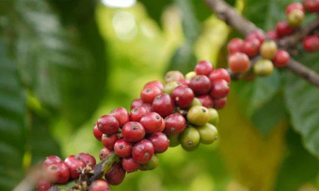 Portfólio IHARA para o café está no Dia de Campo da Fundação Procafé