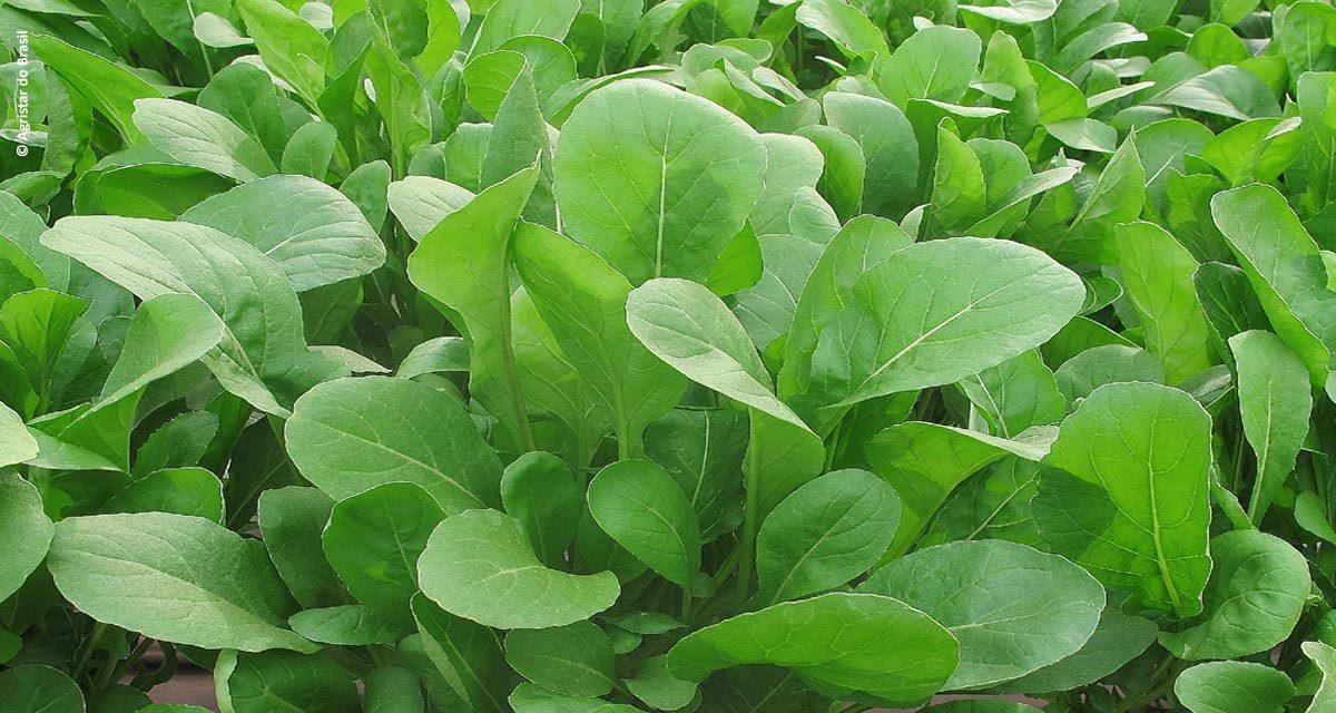 Topseed Premium lança 11 novas sementes para horticultura profissional na Hortitec