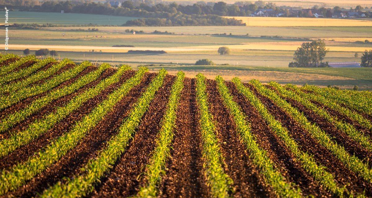 Inovação e sustentabilidade são caminhos para garantia da alimentação mundial, dizem empresas do setor