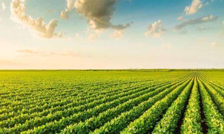 Setor de defensivos agrícolas incentiva mais de 300 mil  agricultores em 2018 às boas práticas agrícolas
