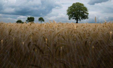Plataforma de monitoramento DataSafra auxilia a estratégia comercial da indústria de insumos agrícolas