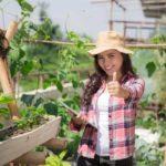 Microsoft e IICA criam plataforma gratuita de vídeos sobre agricultura
