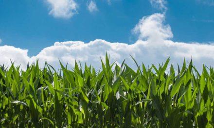 Programa nutricional completo para culturas anuais e perenes traz linha especial de adjuvantes