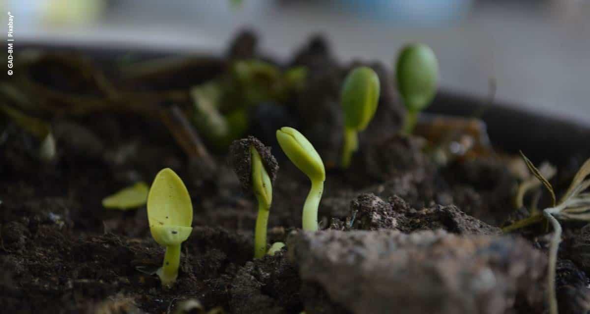 Nutrição de Plantas: o que você precisa saber