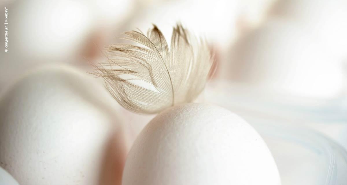 Bastos é disparado o principal produtor de ovos paulista: são 5 bilhões por ano