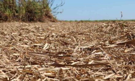 A remoção da palha de cana-de-açúcar poderá dobrar a demanda de fertilizantes no Brasil em 2050