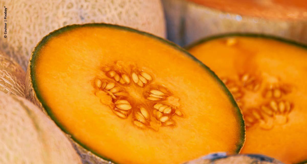 Yara promove 1º Melon Day no Nordeste