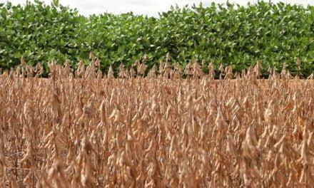 Programa gratuito para produtor rural, Soja Plus, começa em Goiás