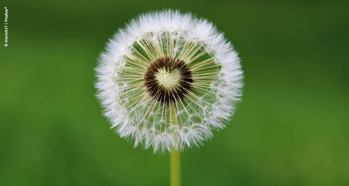 Compliance: a importância para o agronegócio