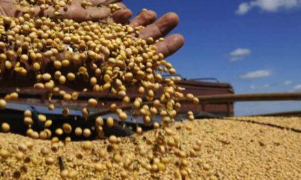 América do Sul tem alto risco para micotoxinas, aponta Pesquisa Mundial da Biomin