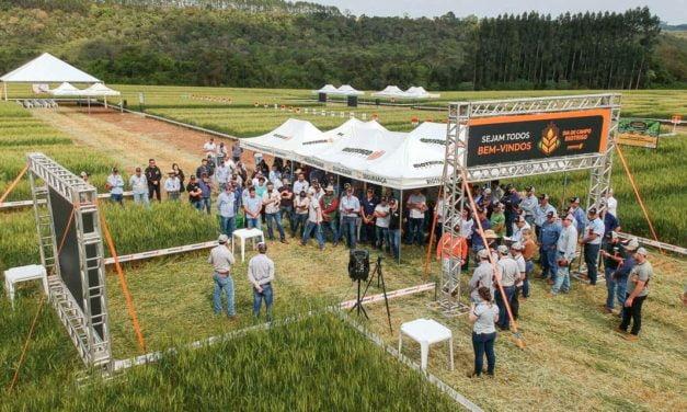 Dia de campo apresenta inovação para o controle de aveia e azevém no trigo