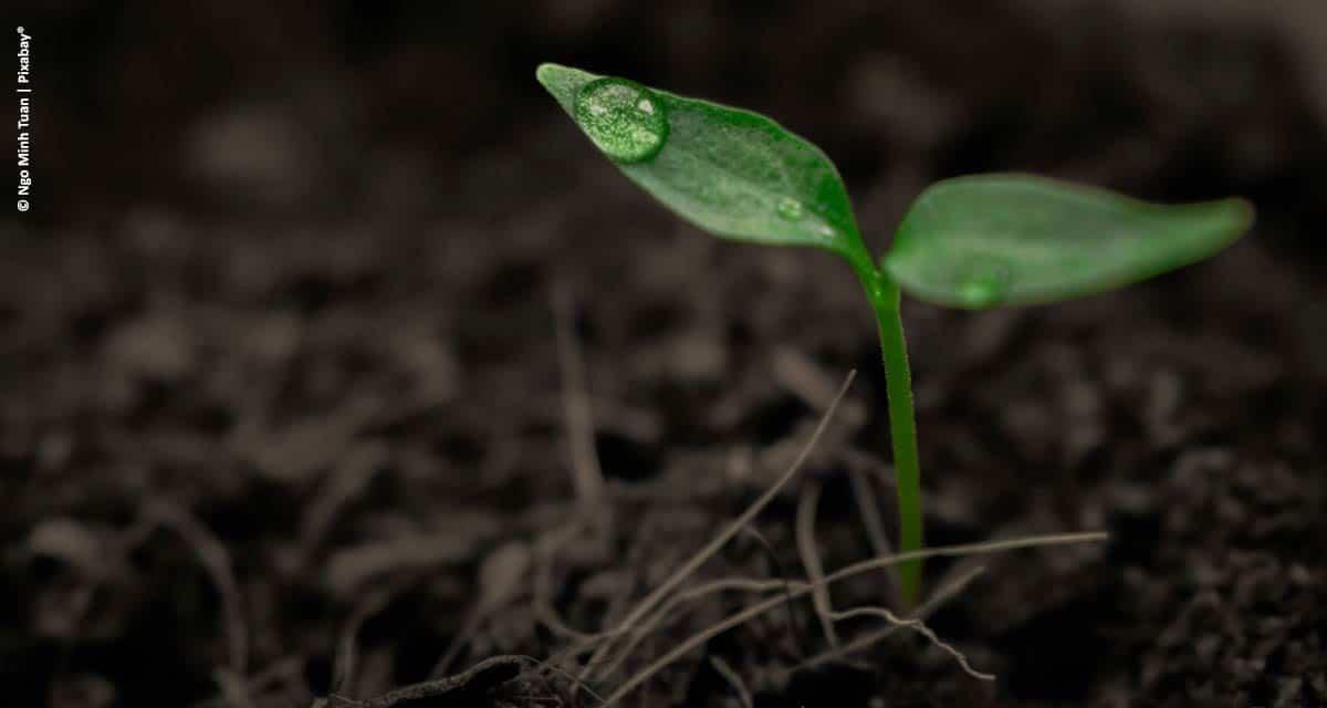 Abisolo ressalta o decisivo papel dos fertilizantes orgânicos compostos no aumento da produtividade do agro brasileiro