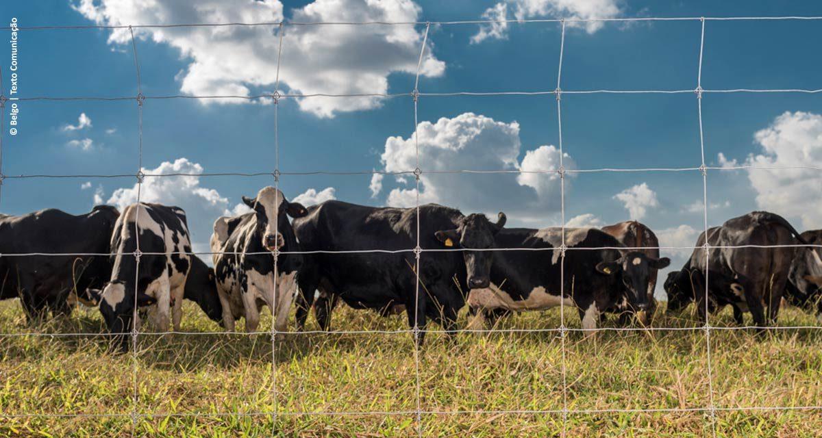 Cerca Pronta Belgo: melhor custo-benefício, economia e mais segurança para o rebanho