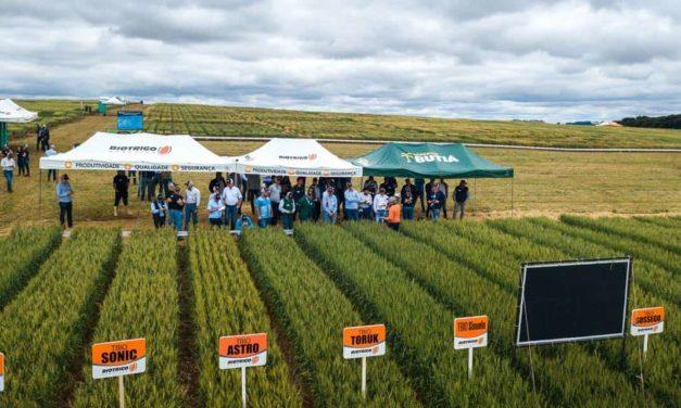 Dia de campo promove imersão no maior programa de melhoramento de trigo da América Latina