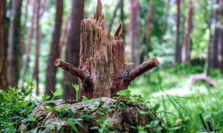 Dispensa de restauração de vegetação nativa prevista pelo artigo 68 do Código Florestal pode chegar a 500 mil hectares no estado de São Paulo