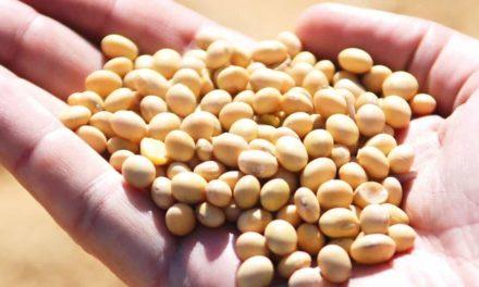 UPL faz caravana por 59 cidades de 12 estados para apresentar formas de proteção e aumento de produtividade da soja