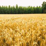 Agricultura mais resiliente é possível e o Brasil já possui as ferramentas