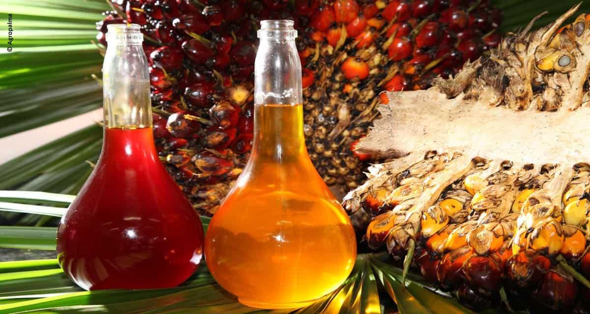 Livre de gorduras trans, óleo de palma traz vantagens e benefícios para a indústria alimentícia