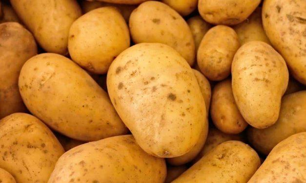 PepsiCo alcança meta de 100% de sua produção de batata sustentável no Brasil