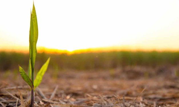 Syngenta inaugura plantio comercial de tecnologia inovadora para cana-de-açúcar