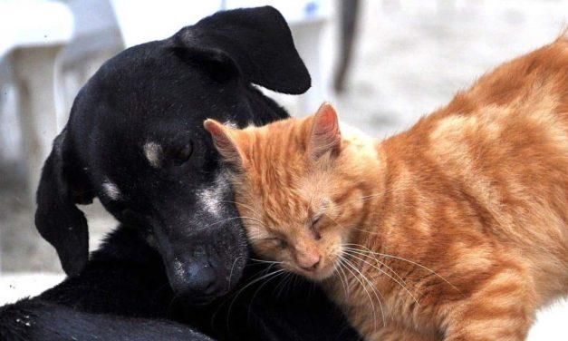 Instituto Pet Brasil lança evento de negócios para mercado pet