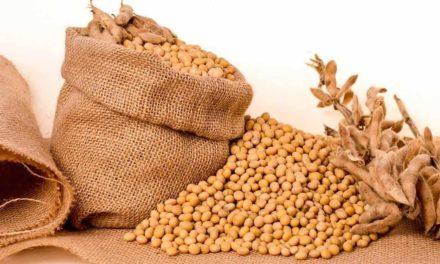 Campanha #BomDeSoja, da ADAMA, enaltece a cultura agrícola e as pessoas que são referência na soja