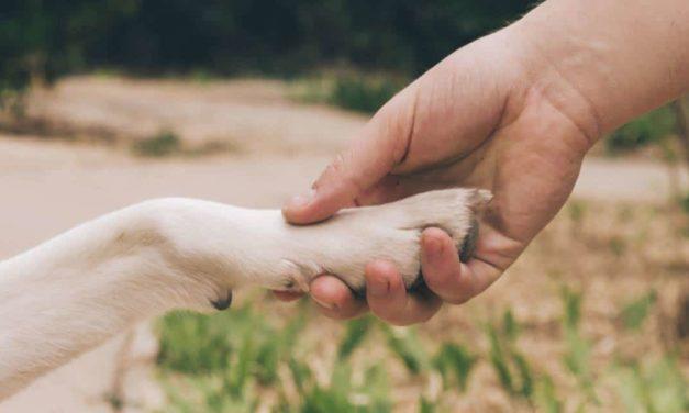 International Pet Meeting acontece durante SuperPet, em Campinas
