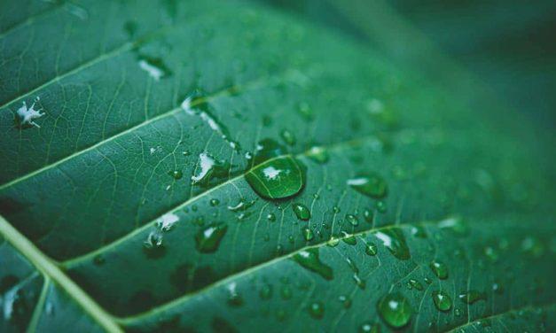 BASF destaca iniciativas que reduzem o consumo de água dentro e fora de suas fábricas