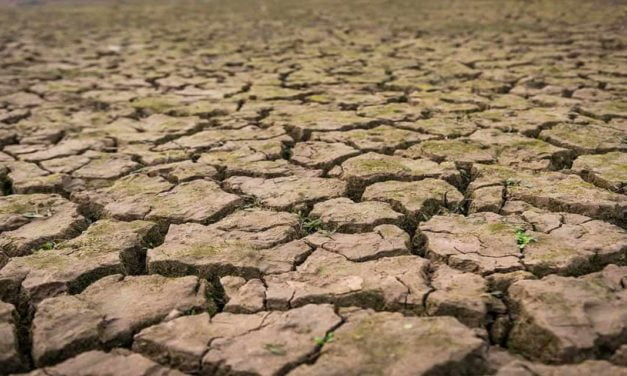 Falta de chuva prejudica colheita da soja na Bahia