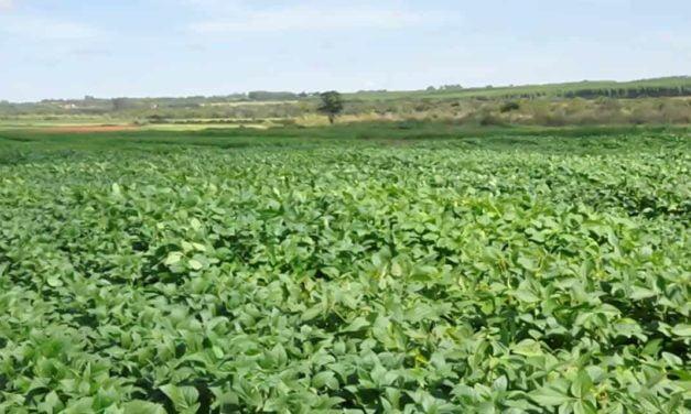 """""""ZARC de Produtividade"""" trará mais segurança ao produtor rural"""