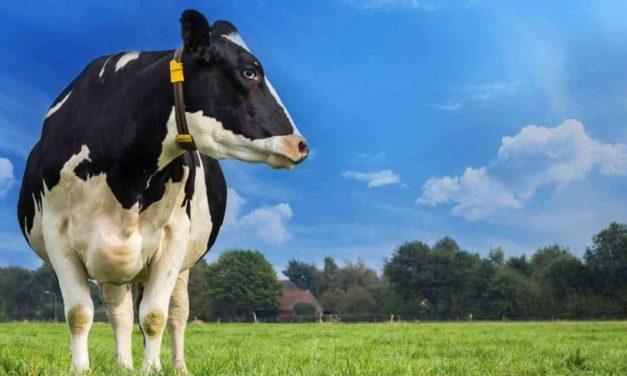 Índice Ideagri do Leite Brasileiro projeta melhoria  no desempenho das fazendas leiteiras em 2020