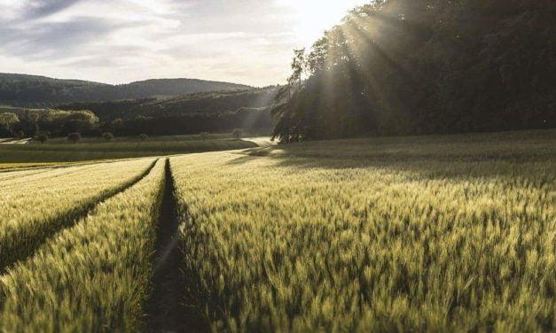 Minerva Foods apoia livro Tons de Verde – A Sustentabilidade da Agricultura no Brasil