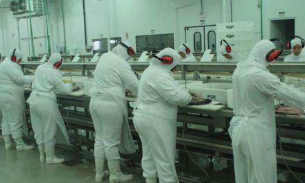 Peixe BR prioriza ações para oferta regular de peixes de cultivo
