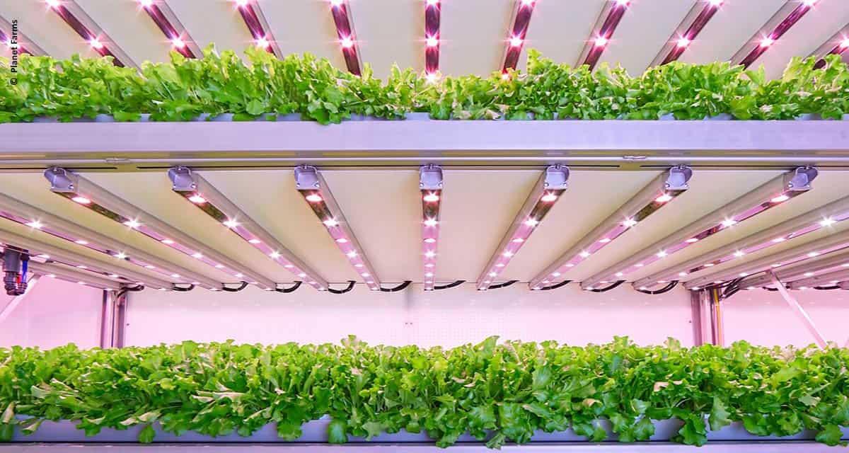 Maior fazenda vertical da Europa usa LEDs de horticultura